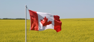 Canada flag flying in a canola field