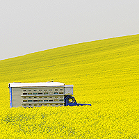 Truck in flowering field