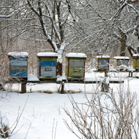 Honey bee hives in winter